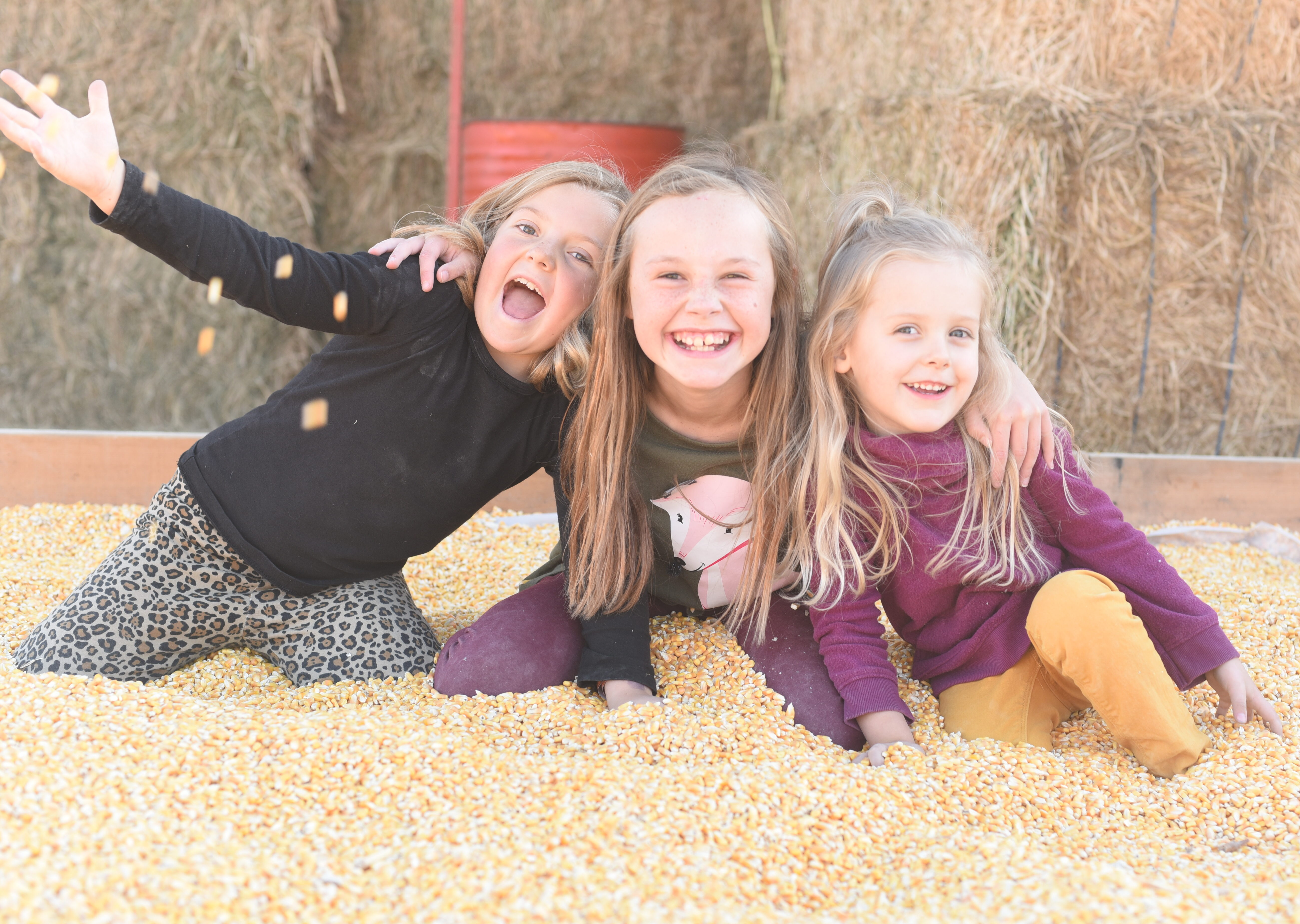 Giant box full of corn to play in at Glen Ray's Corn Maze and Pumpkin Patch
