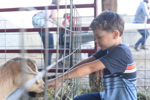 Goats in the Small Animal Farm