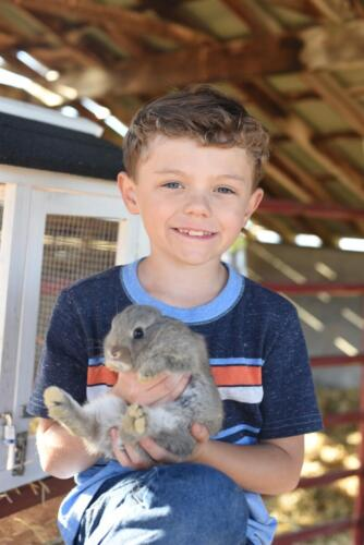 Bunnies at the Small Animal Farm - Glen Ray's Corn Maze and Pumpkin Patch