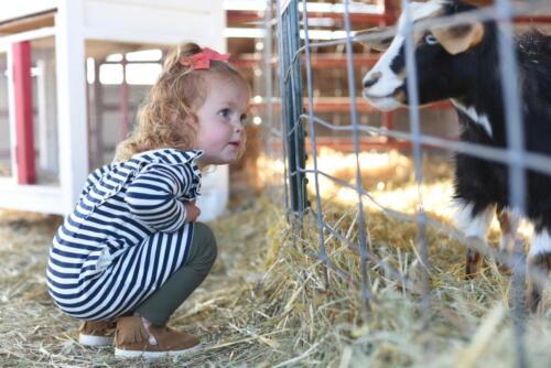 Small Animal Farm at Glen Ray's Corn Maze
