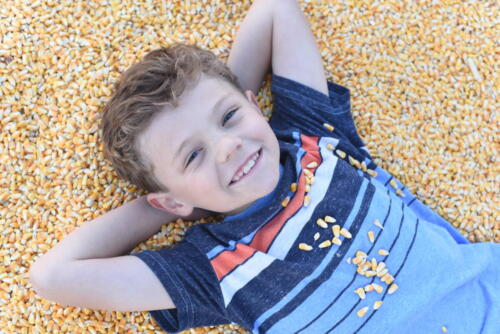 Fun in the corn pit