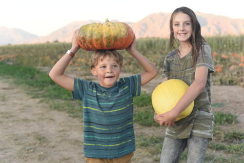 We have a huge variety of pumpkins to choose from.