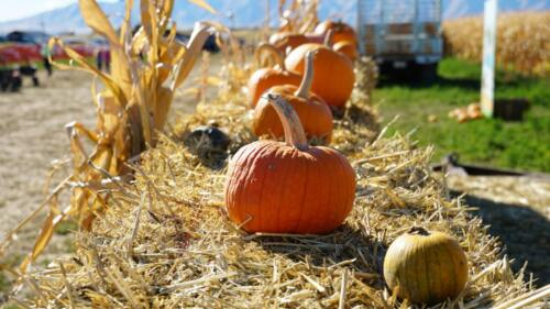 We have pumpkins and all sorts of fall decorations for sale!