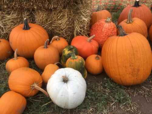 Just a few of the varieties of pumpkins we offer