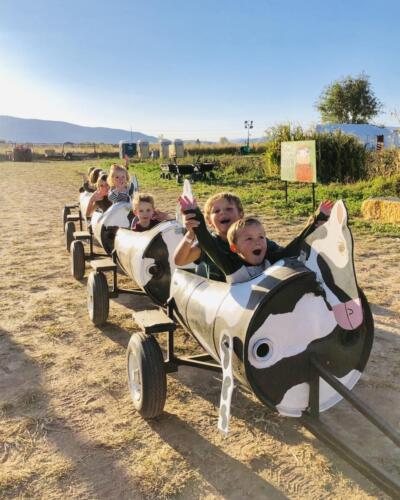 More cow train fun!