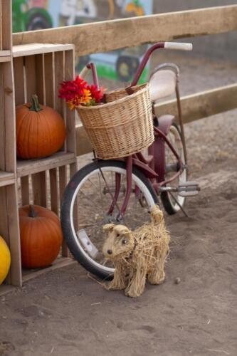 Straw puppy and antique bike