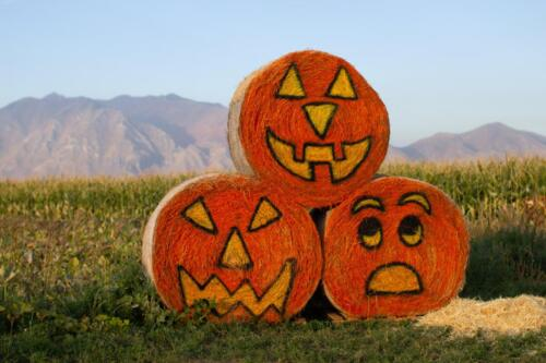 Giant jack-o-lanterns made from straw bales at Glen Ray's Corn Maze and Pumpkin Patch.